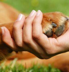 دست در دست سگ، تاثیر نگهداری سگ در روحیه