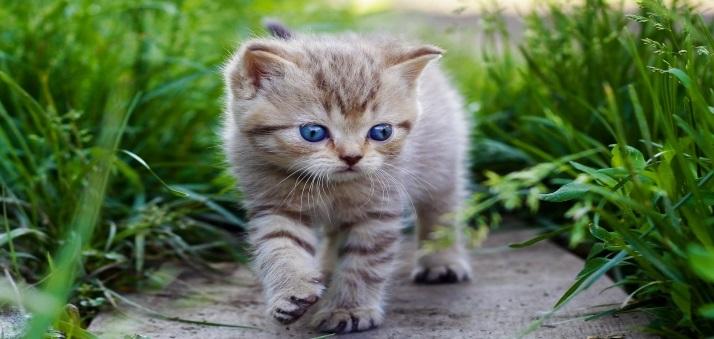 تربیت و آموزش گربه